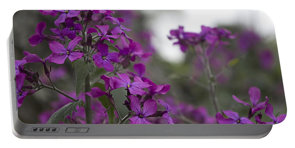 Purple Flowers Portable Battery Charger featuring the photograph Purple Flowers by Sharon Popek