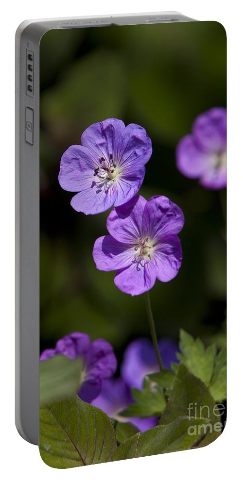 Purple Portable Battery Charger featuring the photograph Purple Geranium Flowers by Jason O Watson