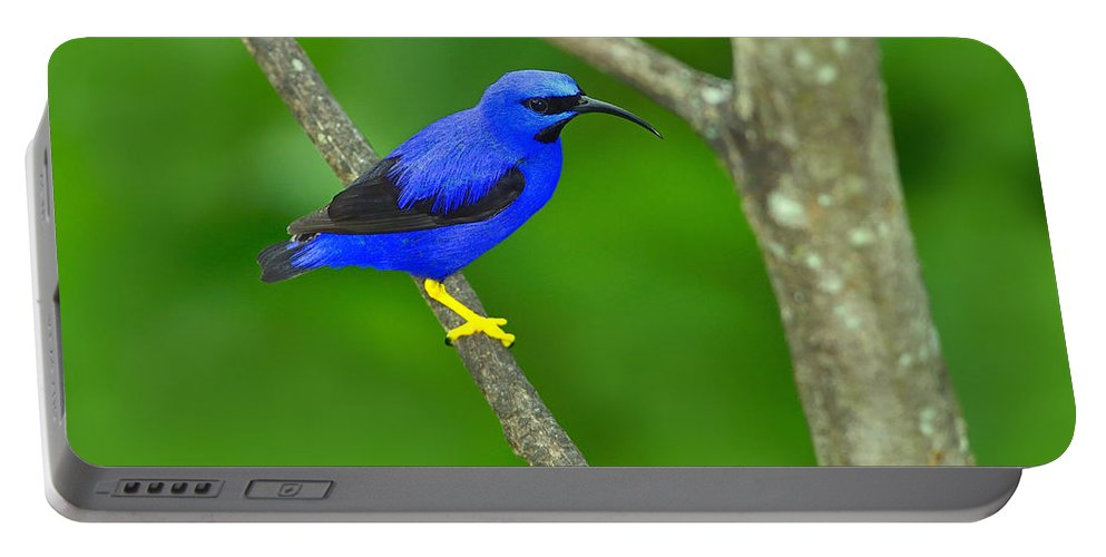Purple Honeycreeper Portable Battery Charger featuring the photograph Purple Honeycreeper by Tony Beck