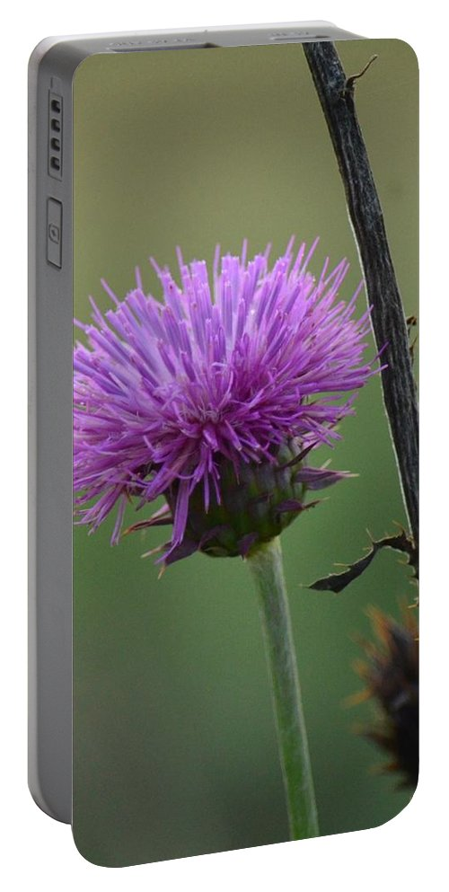 Purple In Nature Portable Battery Charger featuring the photograph Purple In Nature by Maria Urso