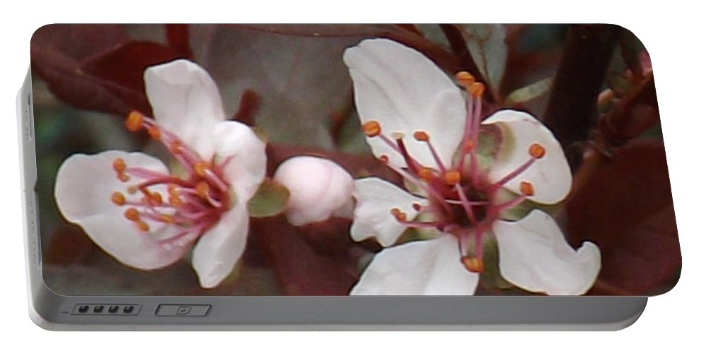 Shrub Portable Battery Charger featuring the photograph Purple Leaf Sand Cherry Burst by Brenda Brown