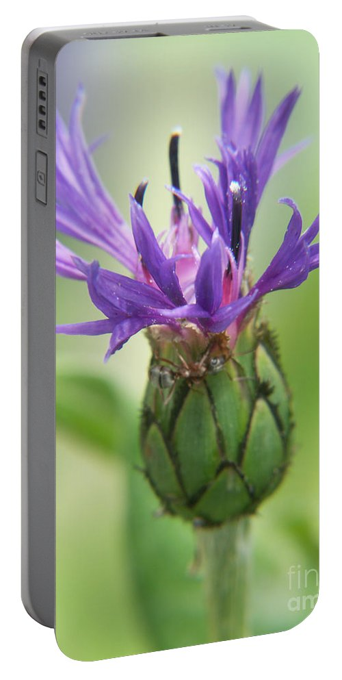 Photography Portable Battery Charger featuring the photograph Purple Majesty by Jackie Farnsworth