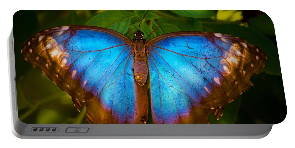 Butterfly Portable Battery Charger featuring the photograph Purple Morpho Butterfly by Mark Andrew Thomas