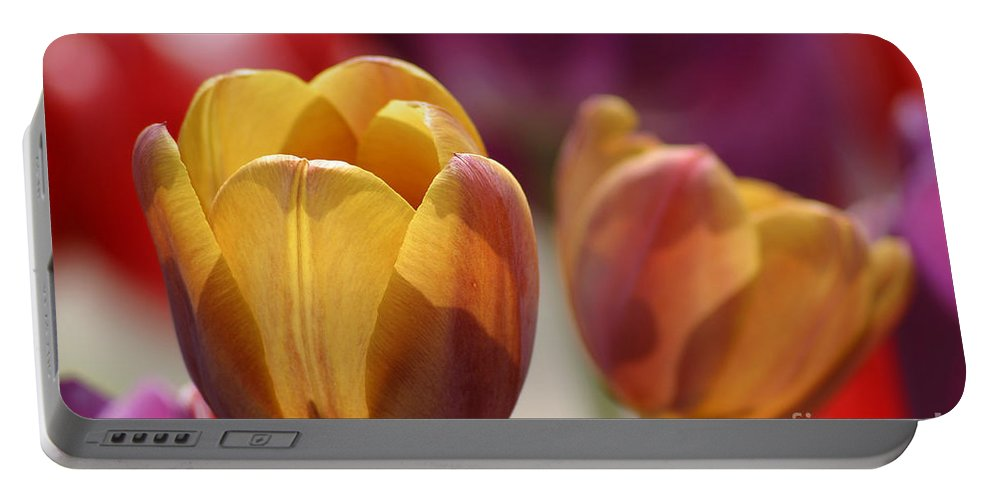 Tulip Portable Battery Charger featuring the photograph Purpleyellowtulips7016 by Gary Gingrich Galleries