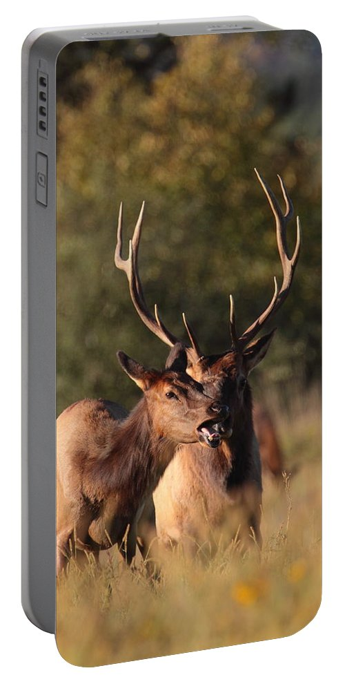 Portable Battery Charger featuring the photograph Pursuit by Bruce J Robinson