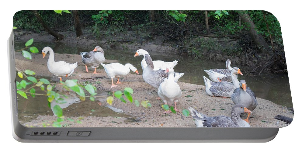 Can You Quack Like A Duck Duck Party Duck Dynasty Pond Sand Trees Rain Forest Portable Battery Charger featuring the photograph Quack Like A Duck by Robert Loe