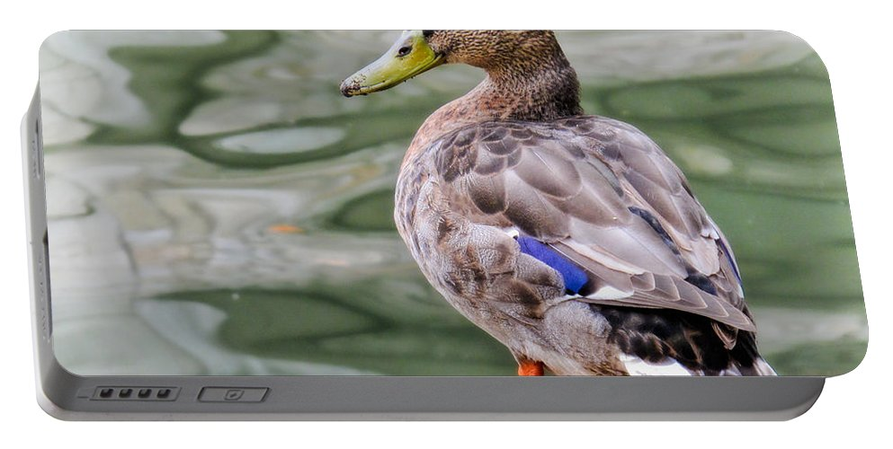 Bird Portable Battery Charger featuring the photograph Quack Quack by David and Carol Kelly