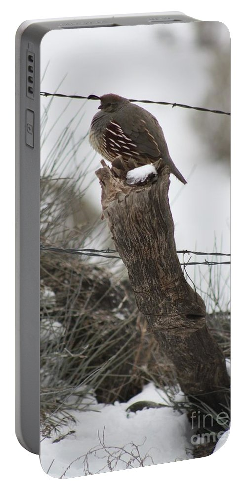 Birds Portable Battery Charger featuring the photograph Quail by Brandi Maher