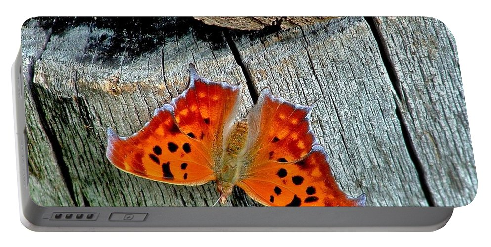 Butterfly Portable Battery Charger featuring the photograph Question Mark Butterfly by Marilyn Smith