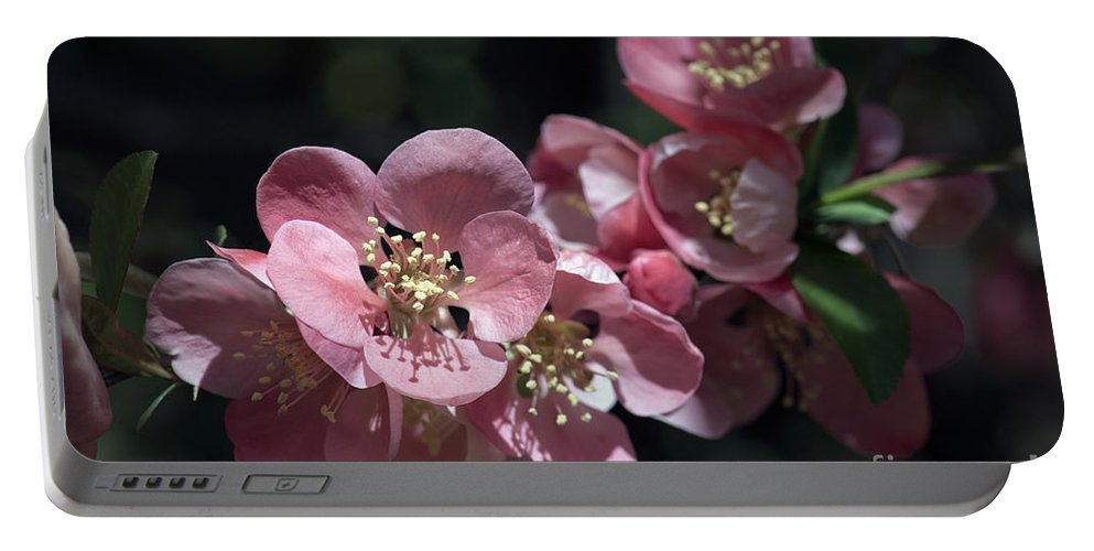Floral Portable Battery Charger featuring the photograph Quince 5160 by Terri Winkler