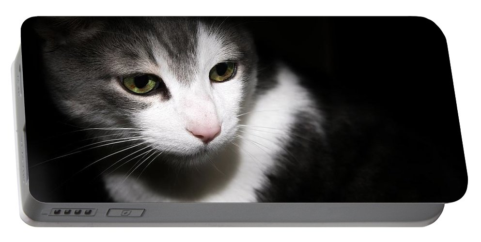 Cat Portable Battery Charger featuring the photograph Quint by Joyce Baldassarre