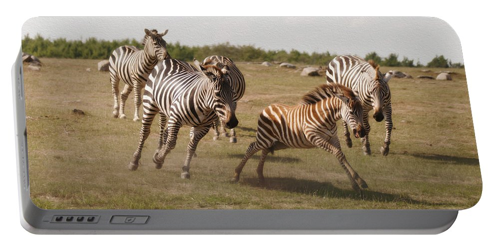 Racing Zebras Portable Battery Charger featuring the photograph Racing Zebras 1 In Color by Tracy Winter