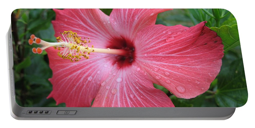 Hibiscus Portable Battery Charger featuring the photograph Rain Soaked Hibiscus by Christiane Schulze Art And Photography