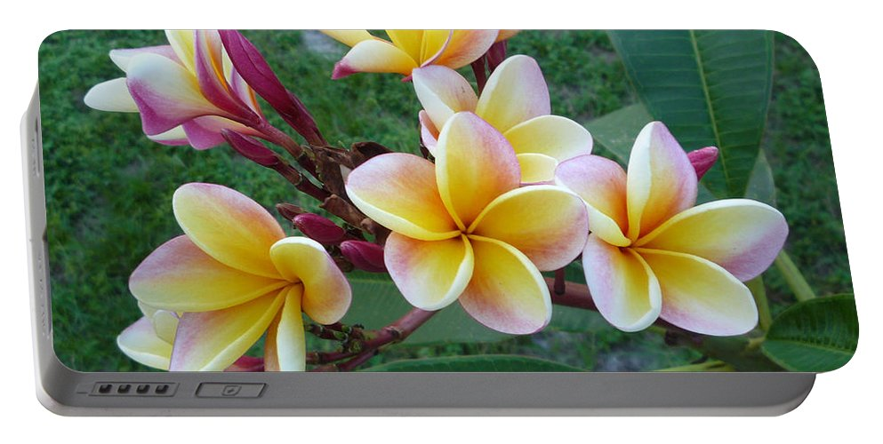 Plumeria Portable Battery Charger featuring the photograph Rainbow Plumeria by To-Tam Gerwe