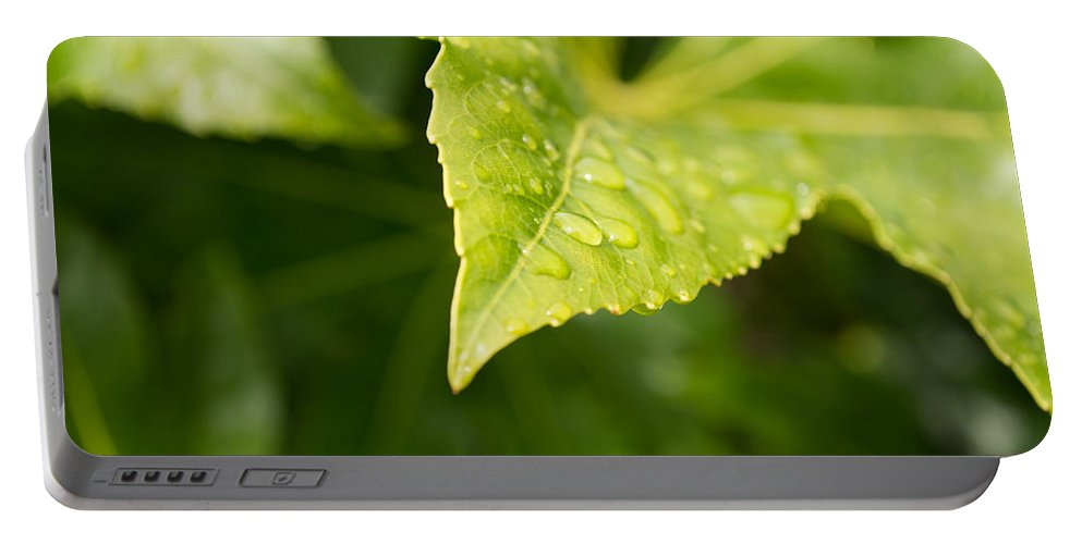 Leaf Portable Battery Charger featuring the photograph Raindrops by Mair Hunt