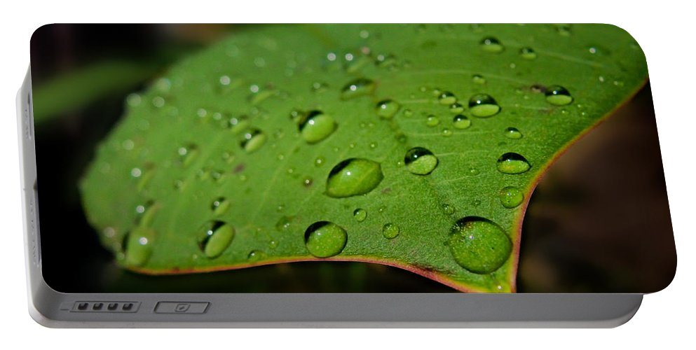 Tropical Plants Portable Battery Charger featuring the photograph Raindrops On Plumeria Leaf by TK Goforth