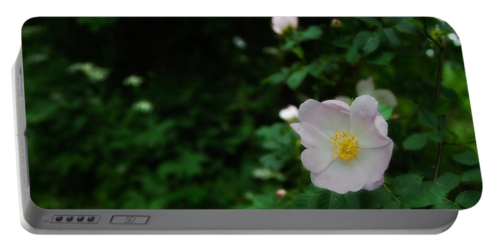 Europe Portable Battery Charger featuring the photograph Ranunculus by Roberto Pagani