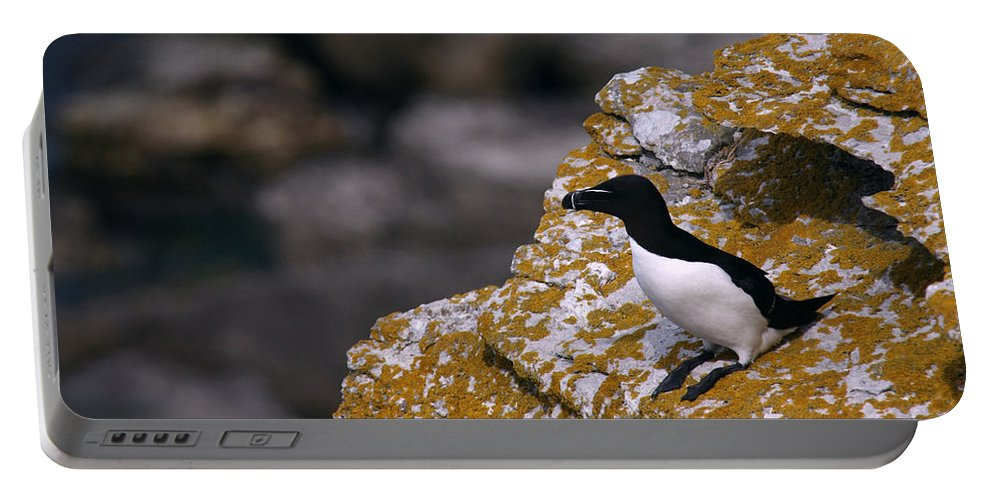 Alvinge Portable Battery Charger featuring the photograph Razorbill Bird by Dreamland Media