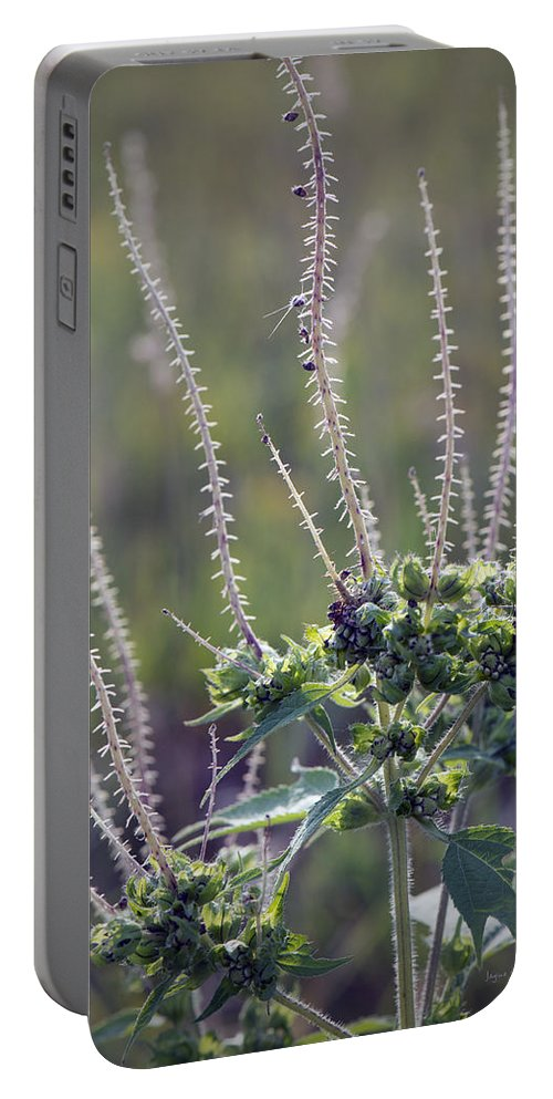 Fall Portable Battery Charger featuring the photograph Reaching For Fall by Jayne Gohr