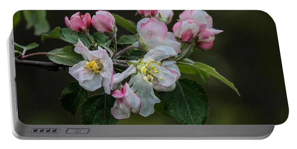 Appleblossoms Portable Battery Charger featuring the photograph Reaching Sunlight by Susan Capuano