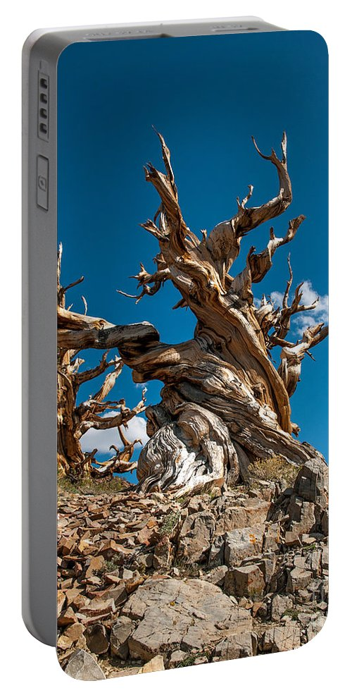 Bristlecones Portable Battery Charger featuring the photograph Reaching Upward by Stephen Whalen