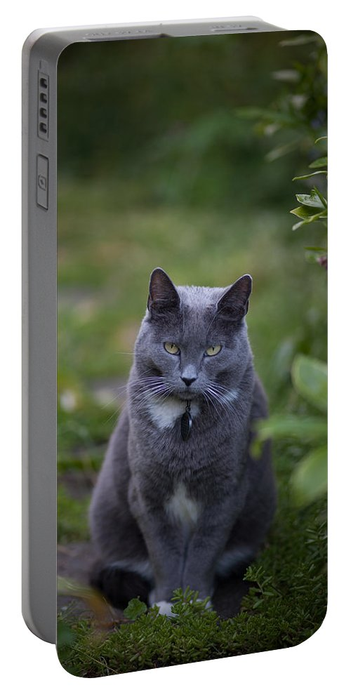 Cat Portable Battery Charger featuring the photograph Really Now by Mike Reid