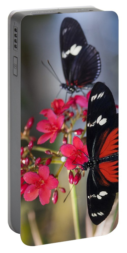 Red And White Longwing Butterflies Portable Battery Charger featuring the photograph Red And White Longwing Butterflies by Saija Lehtonen