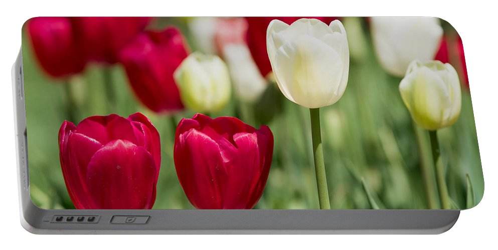Flowers Portable Battery Charger featuring the photograph Red And White Tulips by Rospotte Photography