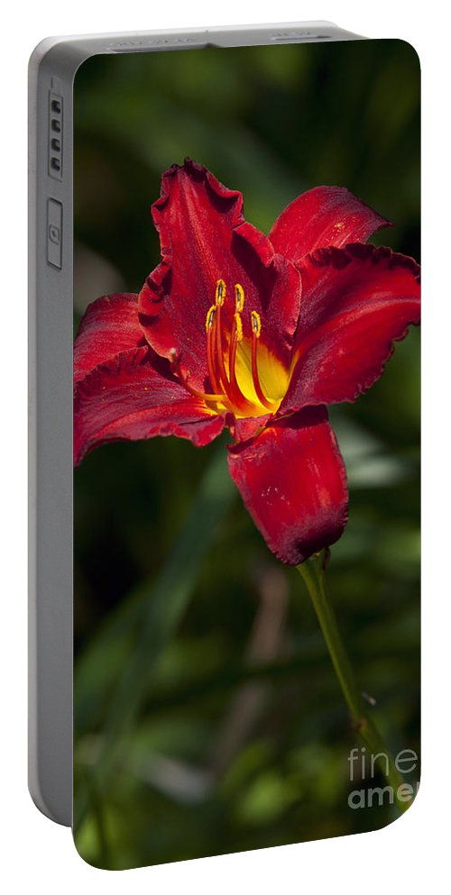 Red Portable Battery Charger featuring the photograph Red And Yellow Daylily by Jason O Watson