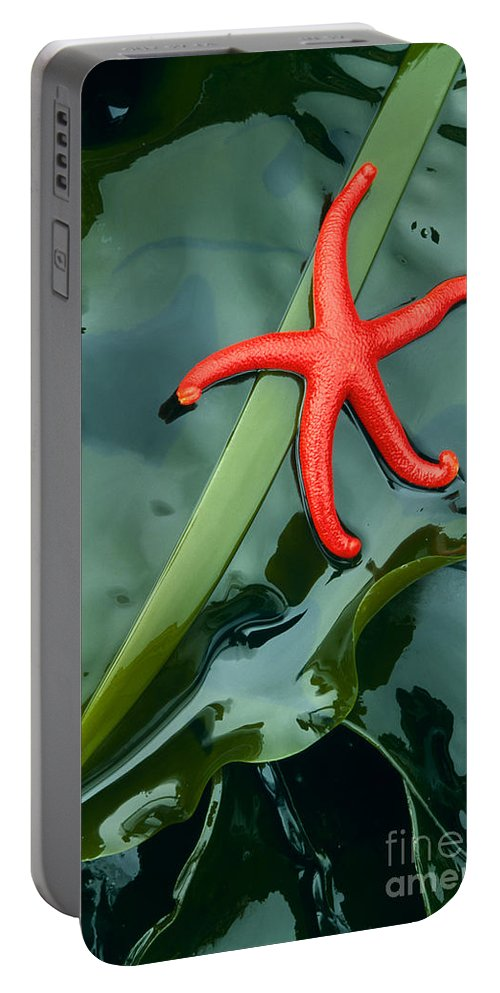 America Portable Battery Charger featuring the photograph Red Bloodstar by Inge Johnsson