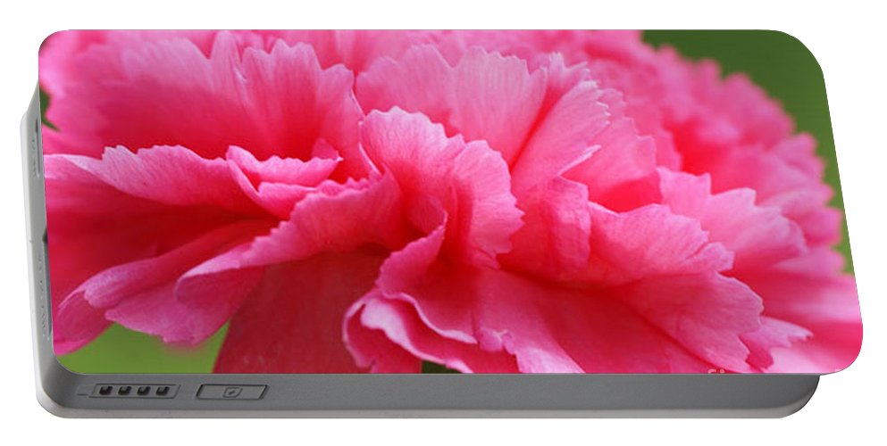 Carnation Portable Battery Charger featuring the photograph Red Carnation by Carol Lynch