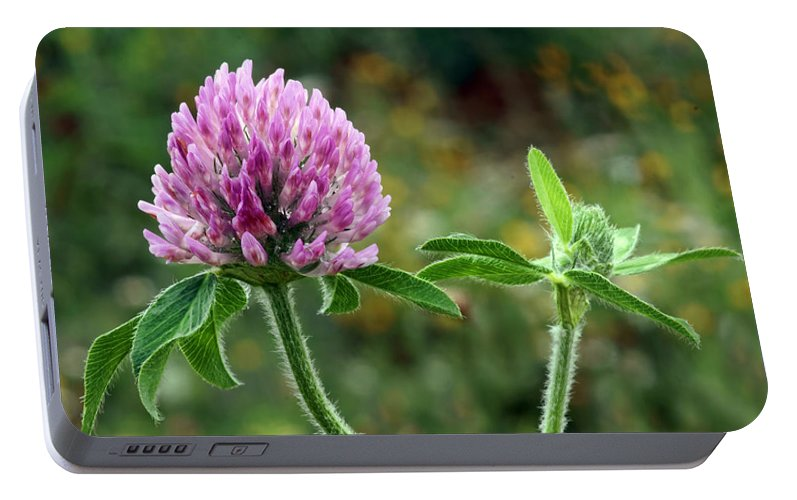 Clover Portable Battery Charger featuring the photograph Red Clover by Nikolyn McDonald