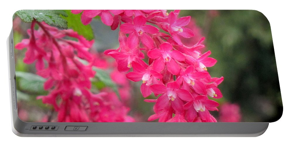 Blossom Portable Battery Charger featuring the photograph Red-flowering Currant Blossom by Lena Photo Art