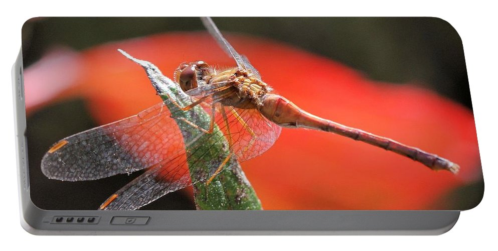 Dragonfly Portable Battery Charger featuring the photograph Red Dragonfly by Doris Potter