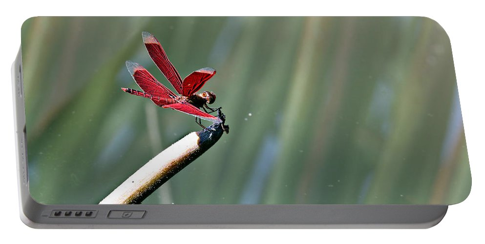Dragonfly Portable Battery Charger featuring the photograph Red Dragonfly by Paul Fell