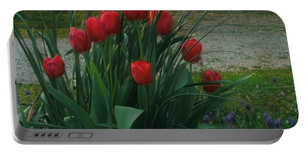Red Dynasty Red Tulips Portable Battery Charger featuring the photograph Red Dynasty Red Tulips by Kip DeVore