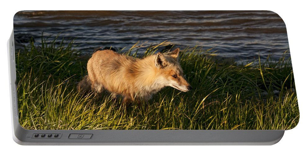 Fox Portable Battery Charger featuring the photograph Red Fox Hunting The Edges At Sunset by Timothy Flanigan and Debbie Flanigan Nature Exposure