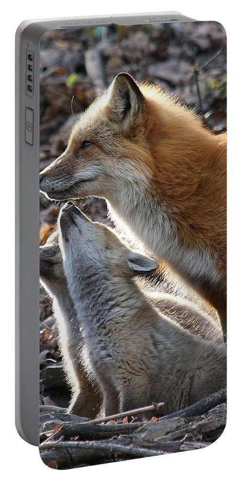 Red Fox Portable Battery Charger featuring the photograph Red Fox With Kits by Doris Potter