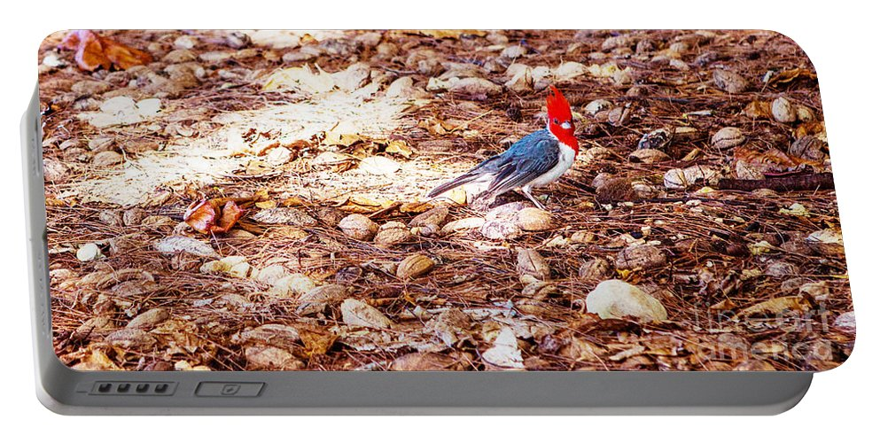 Birds Portable Battery Charger featuring the photograph Red Head by Roselynne Broussard