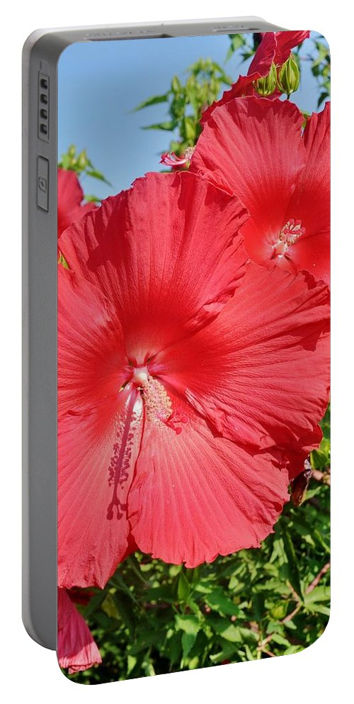 Hibiscus Portable Battery Charger featuring the photograph Red Hibiscus by Kim Bemis