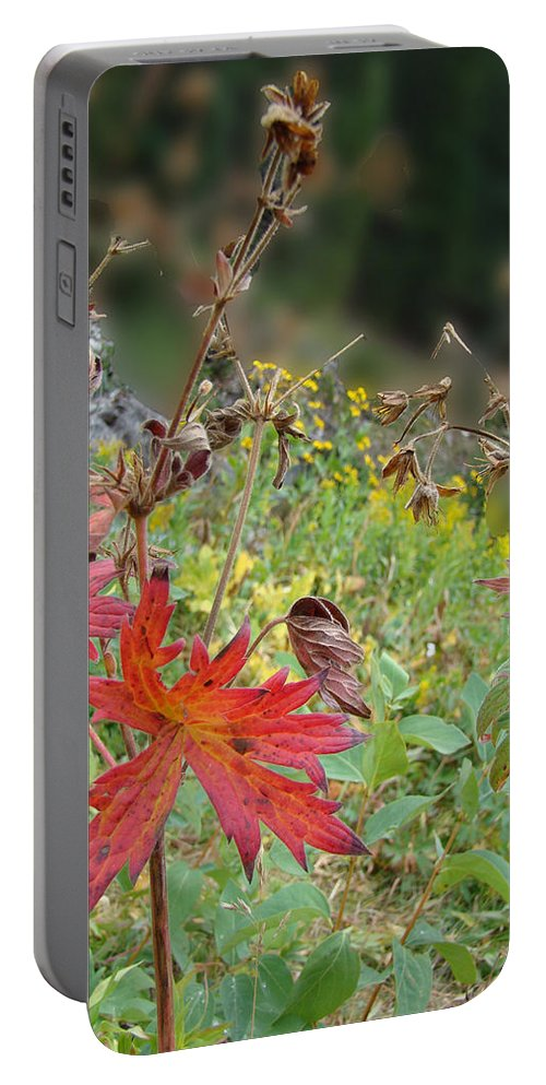 Red Portable Battery Charger featuring the photograph Red Leaf by Cathy Anderson
