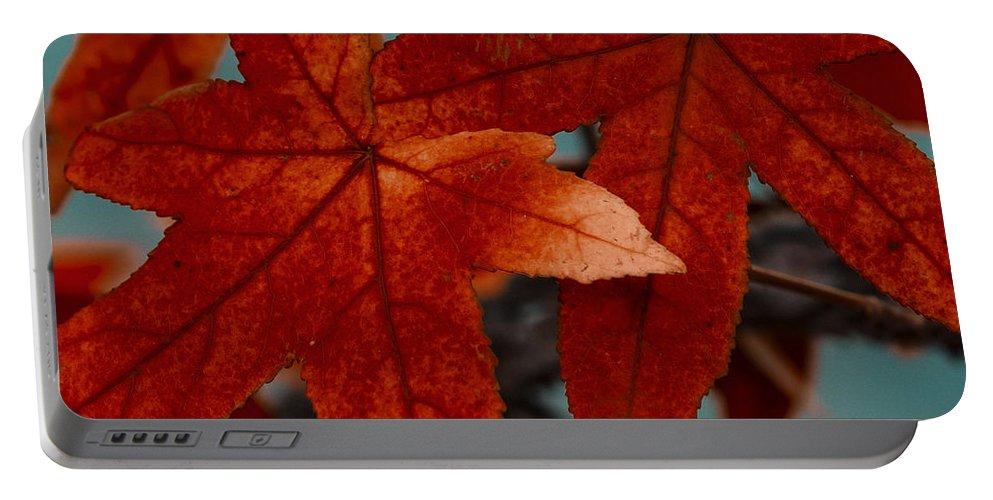 Tree Portable Battery Charger featuring the photograph Red Leaves On The Branches In The Autumn Forest. by TouTouke A Y
