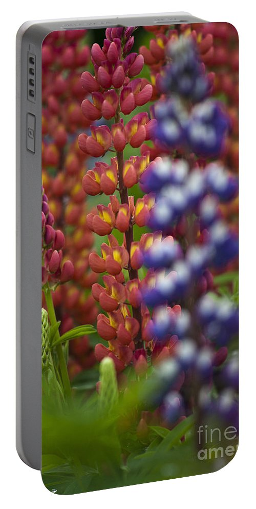 Heiko Portable Battery Charger featuring the photograph Red Lupinus by Heiko Koehrer-Wagner