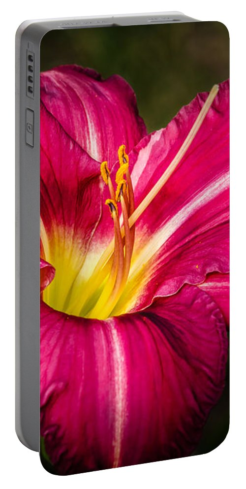 Flower Portable Battery Charger featuring the photograph Red Magic Daylily by Bob Orsillo