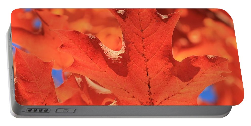 Maple Leaves Portable Battery Charger featuring the photograph Peak Color Maple Leaves by Michael Saunders