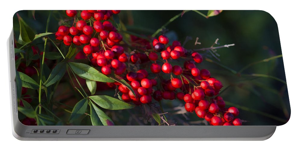 Buzz Portable Battery Charger featuring the photograph Red Nandina Berries - The Heavenly Bamboo by Kathy Clark