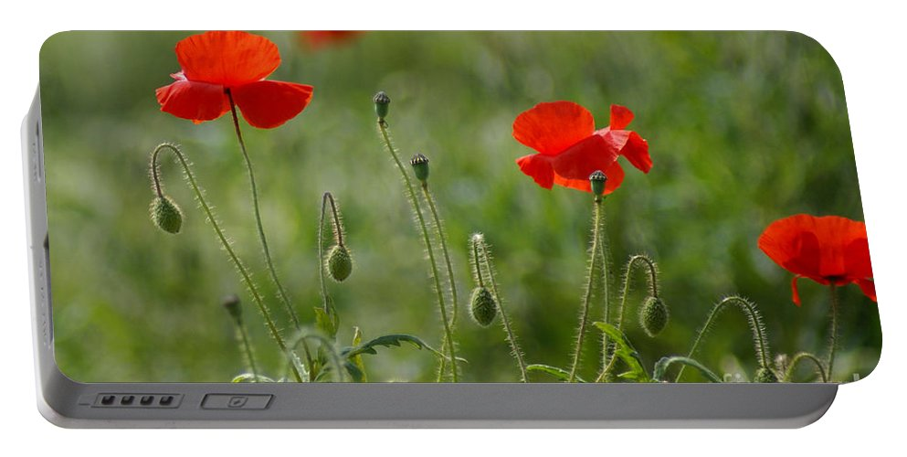 Poppies Portable Battery Charger featuring the photograph Red Poppies 2 by Carol Lynch