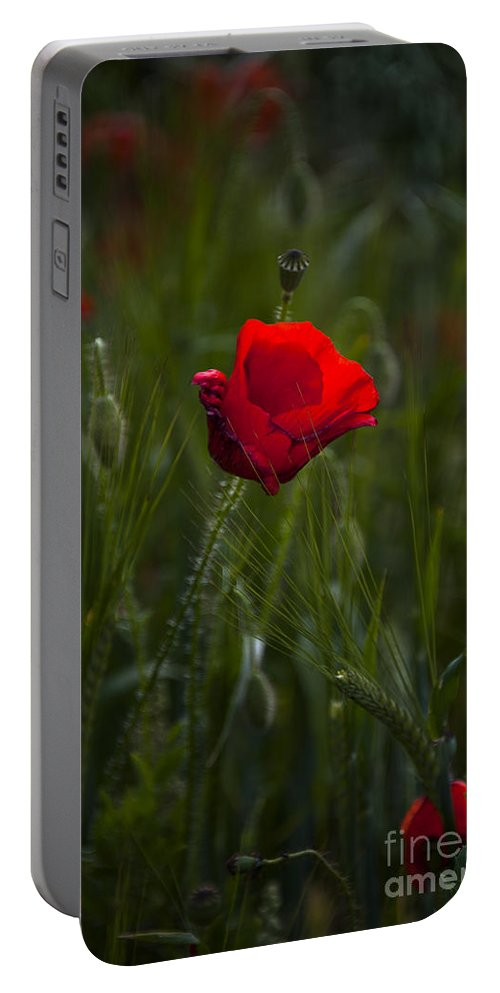 Bloom Portable Battery Charger featuring the photograph Red Poppy by Svetlana Sewell