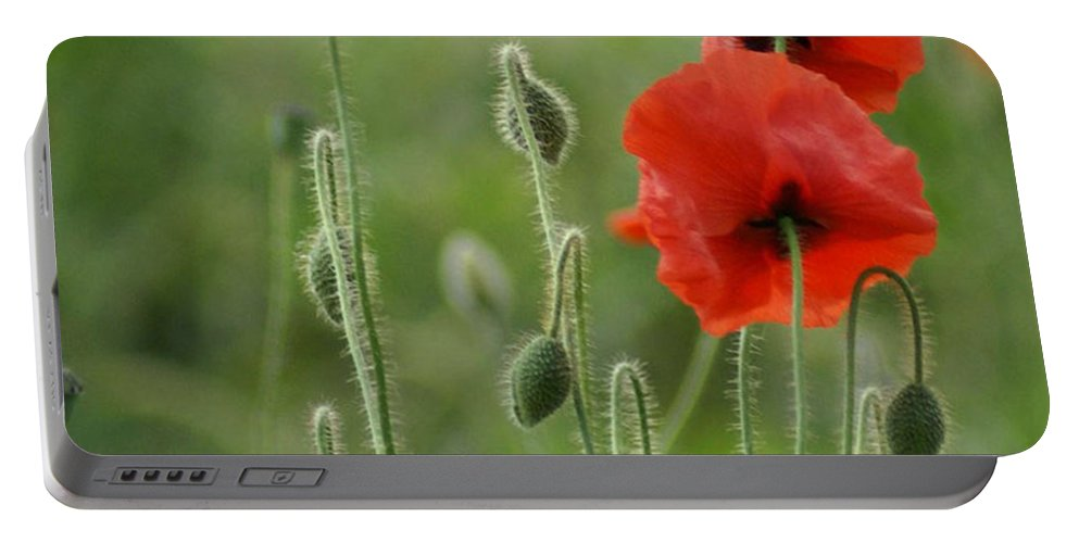 Poppies Portable Battery Charger featuring the photograph Red Red Poppies 1 by Carol Lynch