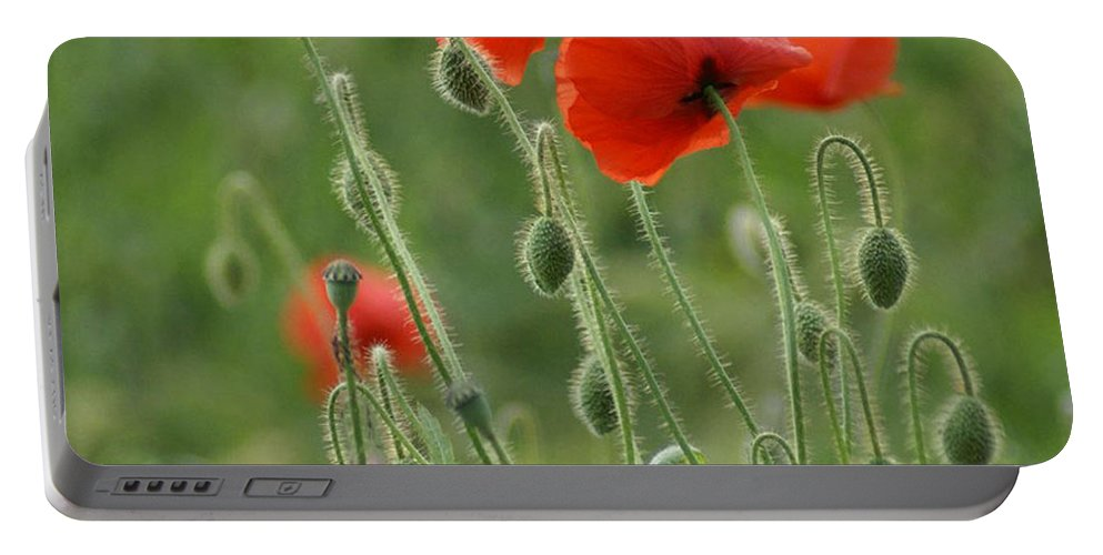 Poppies Portable Battery Charger featuring the photograph Red Red Poppies 2 by Carol Lynch